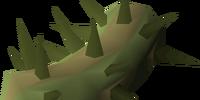 Potato cactus