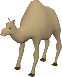 Ollie the Camel