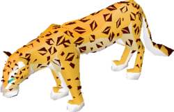 Female amur leopard