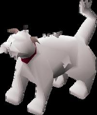 Lazy cat (white) pet
