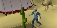 Money making guide/Picking cactus spines