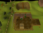 Emote clue - cry gnome agility arena