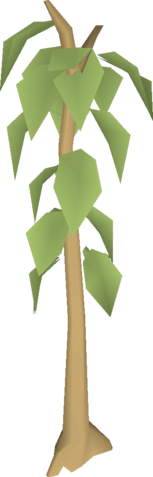 File:Teak tree.png