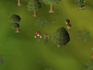 Hot cold clue - south of the Tree Gnome Stronghold