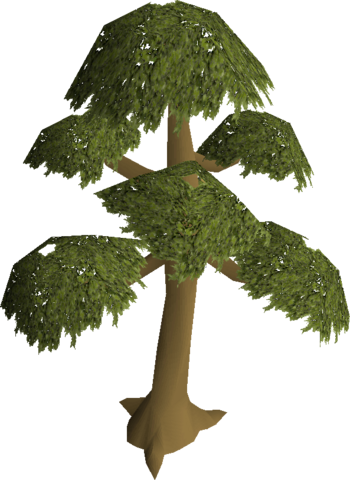 File:Yew tree.png