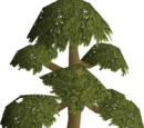 Pay-to-play Woodcutting training