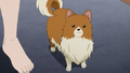Edgeworth's dog AAa.png