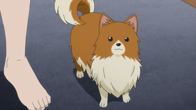 File:Edgeworth's dog AAa.png