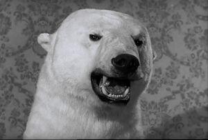 Af bear 2 problem