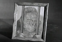 Af gorgo chimp
