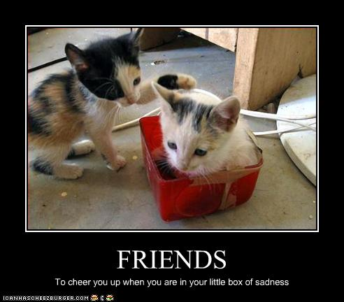 File:Funny-pictures-kitten-has-friends.jpg
