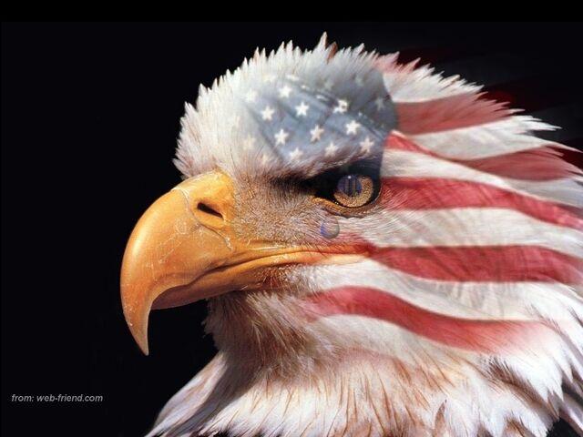 File:American-eagle-flag.jpg