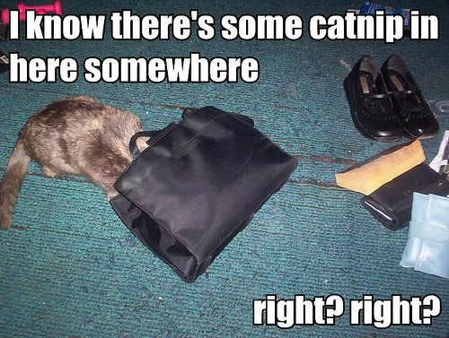 File:Misty in my purse.jpg