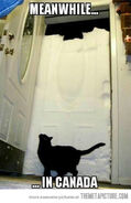 Funny-cat-door-snow
