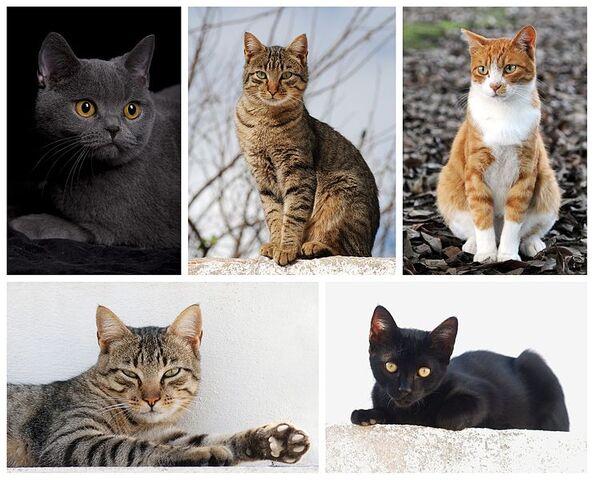 File:742px-Cat poster 2.jpg