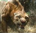 Ferus Tiger.png