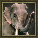 WildElephant icon