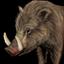 Boar icon