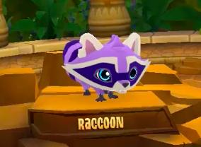 Raccoon Play Wild Wiki Fandom Powered By Wikia