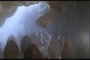 Aliens-eggs-eggsack