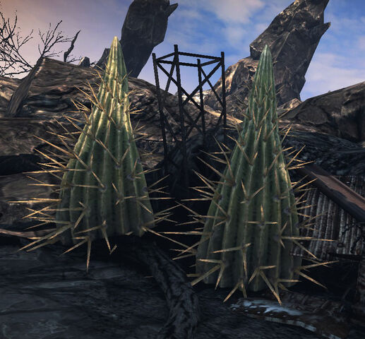 File:Giant Cactus.jpg