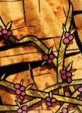 Phaedan-berry-vine
