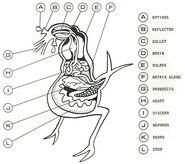 OrnithoidAlien-INT
