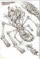 Q'orl-autopsy