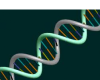 File:DNA Strand 1.png