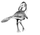 Andalgalornis steulleti