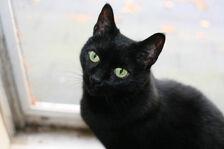 Cat-pictures-black-cat-473