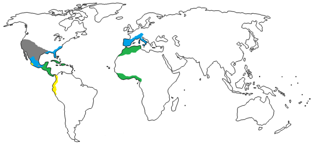File:1550 A.D..png