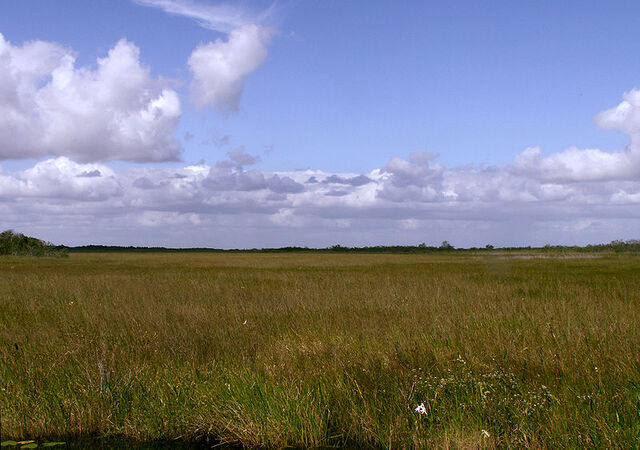 File:800px-Everglades Sawgrass Prairie Moni3.jpg