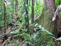 Wet Forests of Queensland
