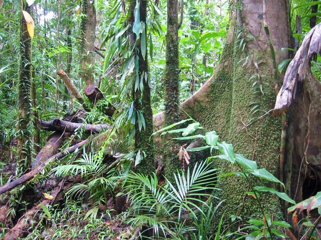 File:Wet Forests of Queensland.jpg