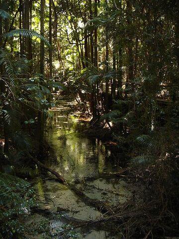 File:Fraser Island.jpg