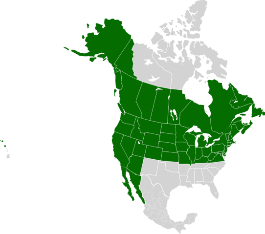 File:AMP Location of the United States of America.png