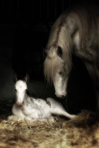 File:Gypsy Horse.jpg