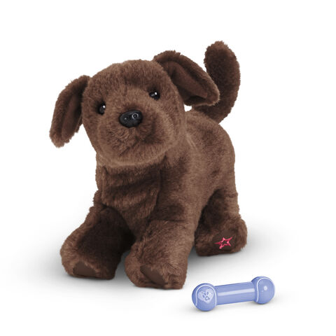 File:ChocolateLabPuppy2014.jpg