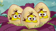 Egg Sounds Hatchlings 3