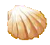 File:Seashell.png