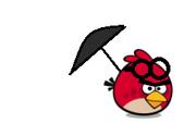 Parasol Goggle Bird