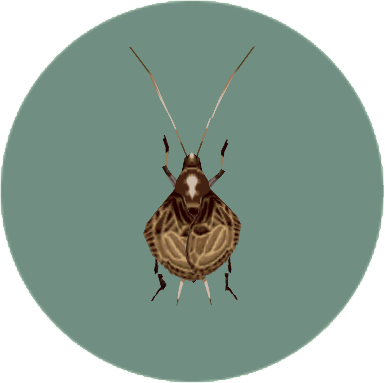 File:Bellcricket (City Folk).png