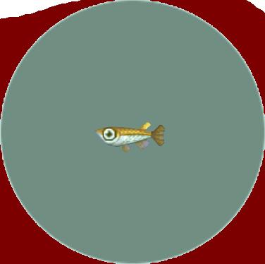 File:Killifish (City Folk).png