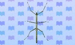File:Walking stick encyclopedia (New Leaf).jpg