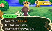 Meeting Saharah