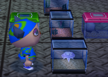 File:Jellyfish tank.PNG