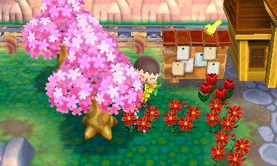 File:CherryBlossomNL1.jpg
