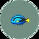 Surgeonfish (City Folk)