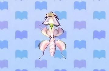 File:Orchid mantis encyclopedia (New Leaf).jpg